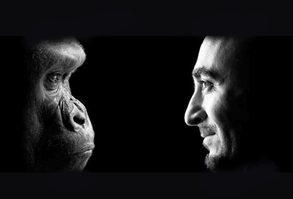 human animals similarities & love