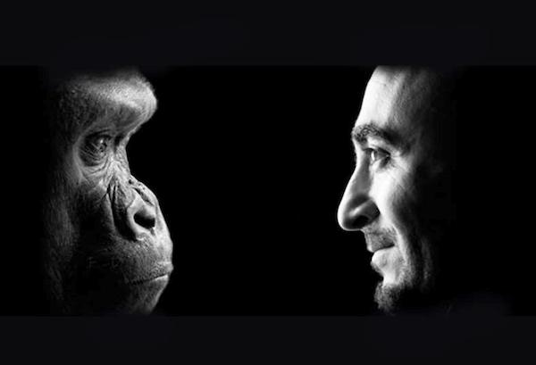human animals similarities & love